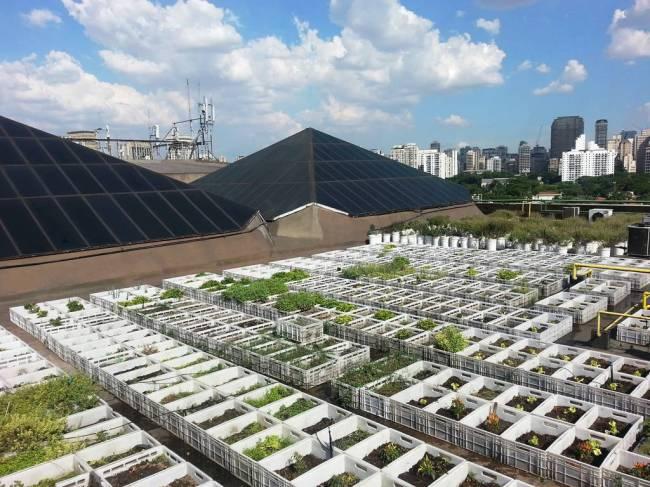 Telhado verde 2015