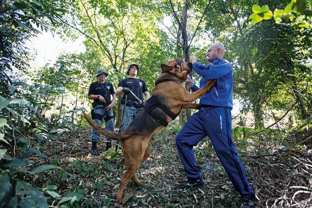 Cão de busca na mata (Foto: Leo Martins)