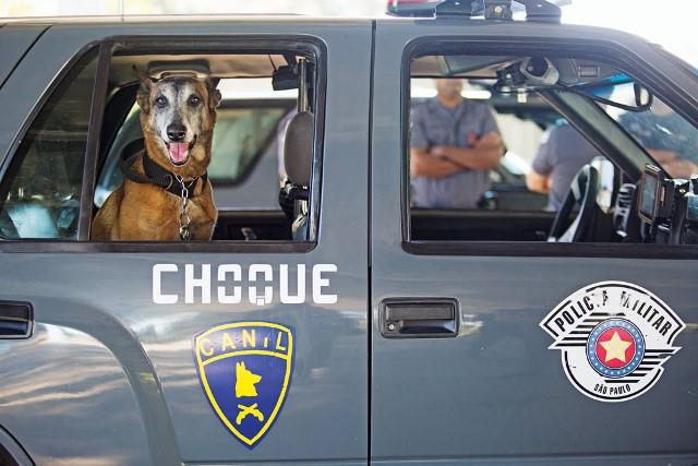 Cães da PM de SP atuarão em peso para compor a segurança nos Jogos Olímpicos na capital. (Foto: Leo Martins)