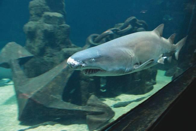 Tubarão - Abre Crianças - 2244