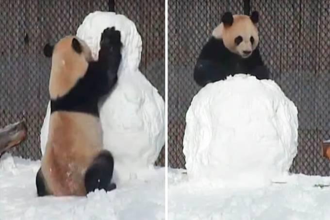 urso_panda_neve