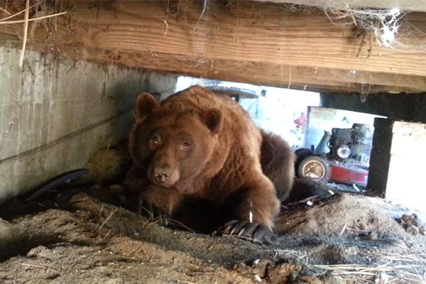 ursoexpulso