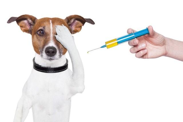 vacinacao-caes-1024×6831