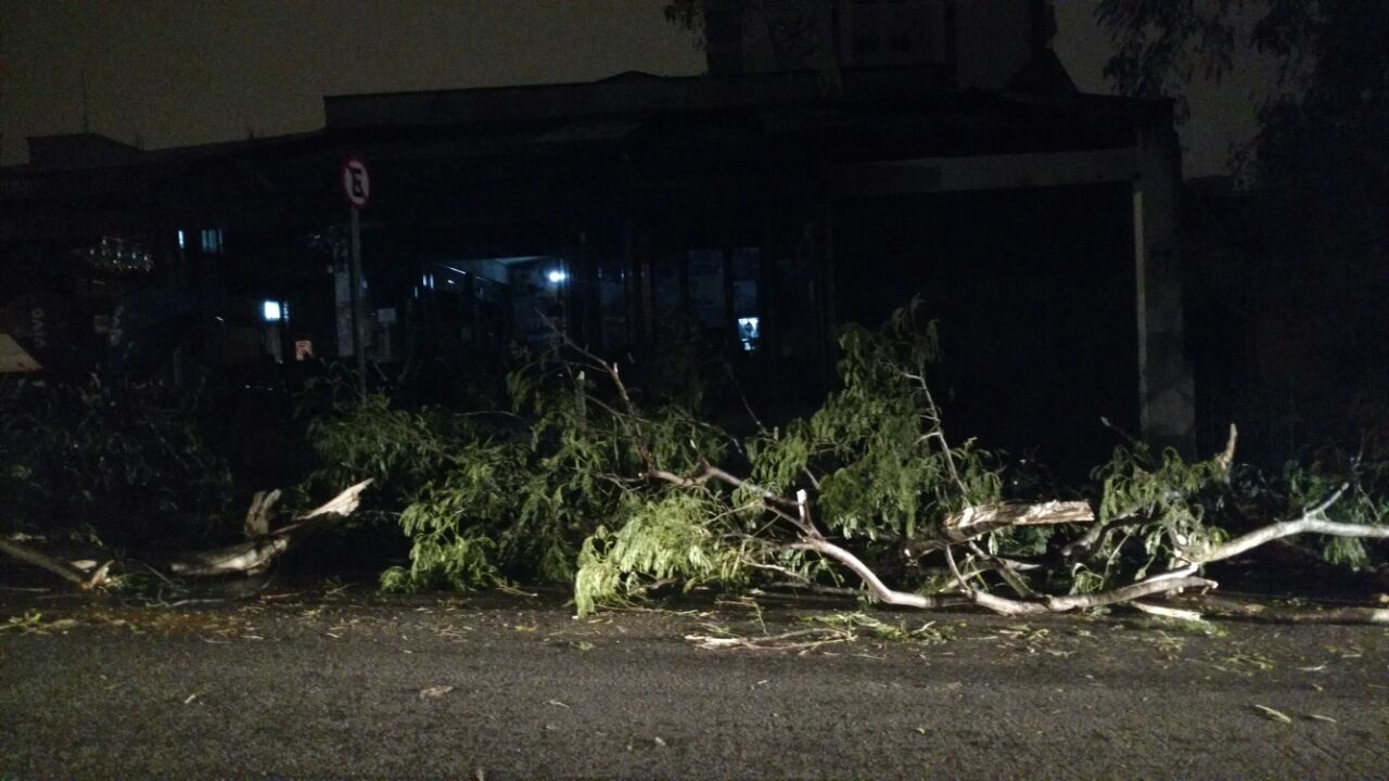 Bar Seu Domingos: sem luz após queda de árvore na rua Fidalga