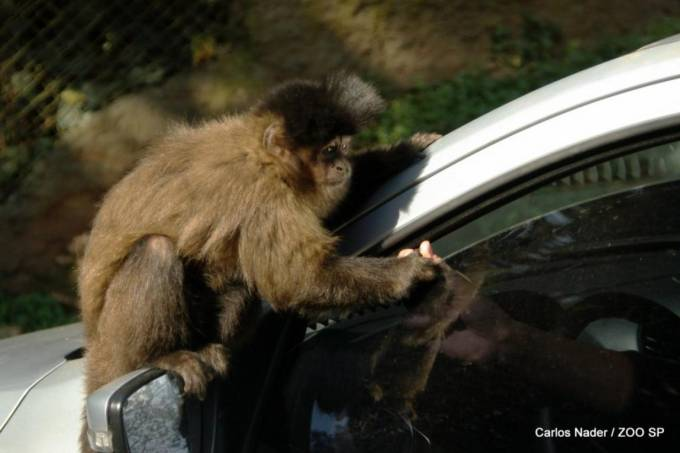Zoo Safari – macaco