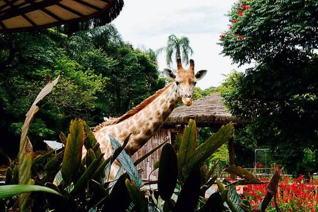 Lugares para se esbaldar - Capa Brinquedos Ed. 51 - Zoológico de São Paulo