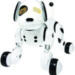 Zoomer: disponível por R$ 499,00 apenas nas redes PBKIDS e Ri Happy
