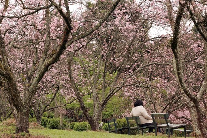 parque-do-carmo-cerejeiras-5.jpeg