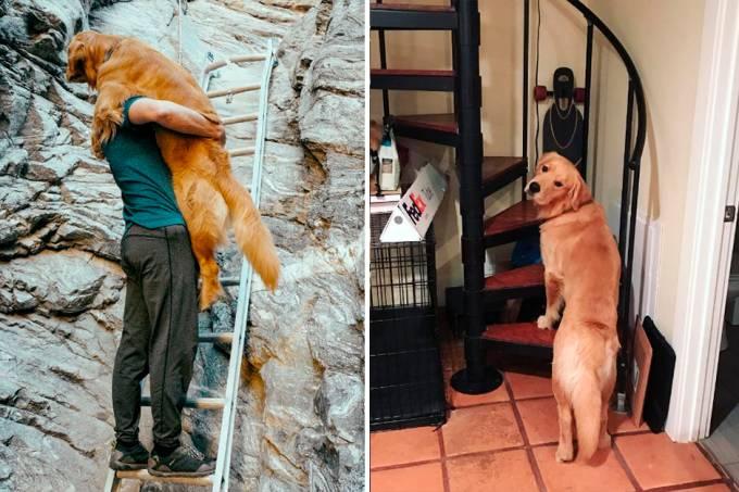 cachorro-medo-escadas