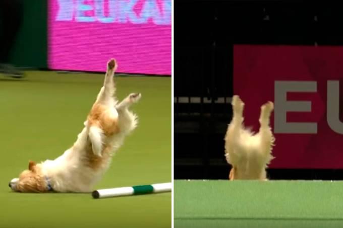 cachorro-empolgado-percurso-velocidade