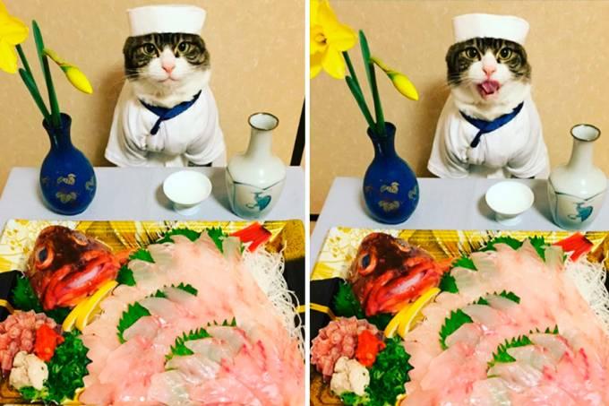 gato-sucesso-instagram