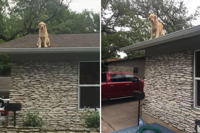 cachorro-telhado-01