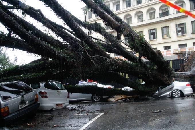 Queda de árvore na Rua Itapeva, em SP