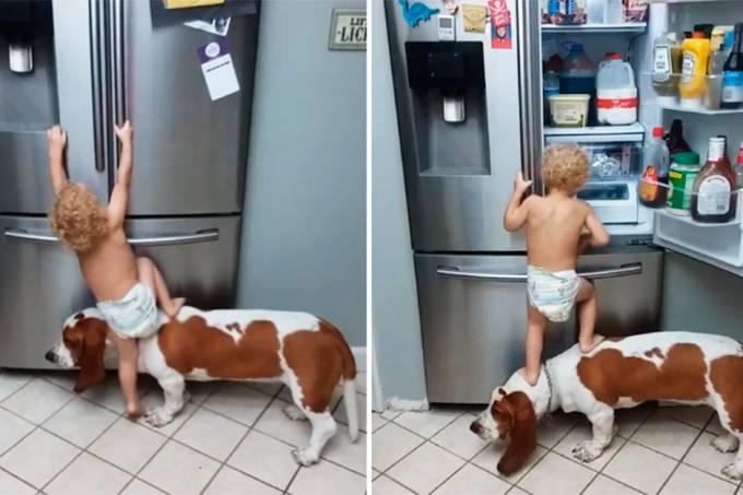 bebe-cachorro-assaltar-geladeira