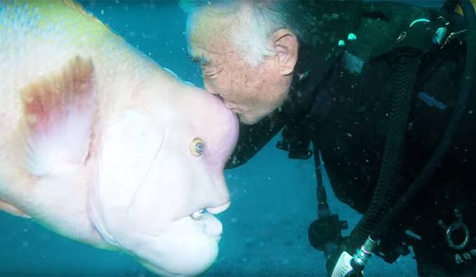 diver-fish-25-year-friendship-hiroyuki-arakawa-japan-594cd570ba8ec__700