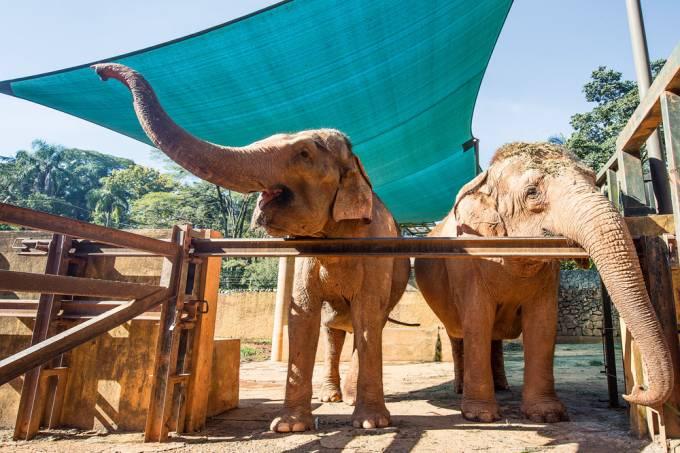 Zoológico de São Paulo – Elefantas