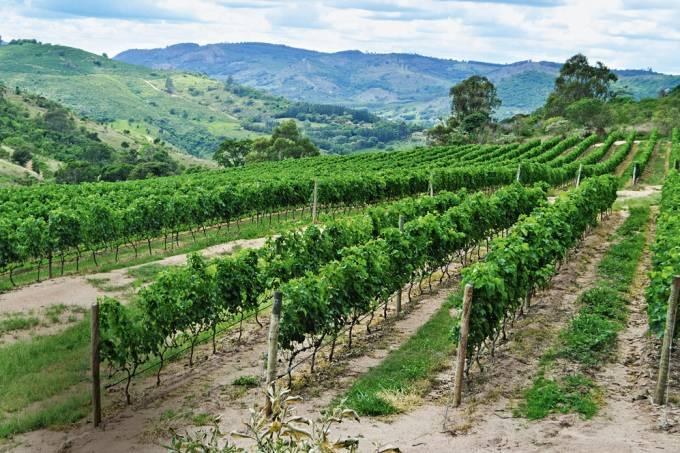 Parreiras de uva na Vinícola Guaspari.