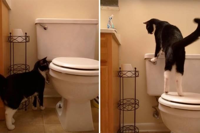 gato-aprende-a-dar-a-descarga