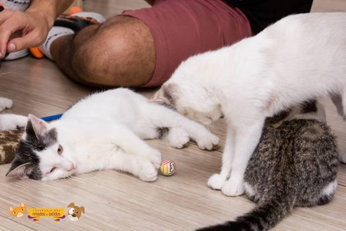 Amassa Gato – Confraria dos Miados e Latidos