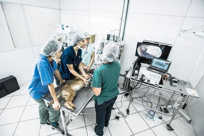 Hospital veterinário público do Tatuapé