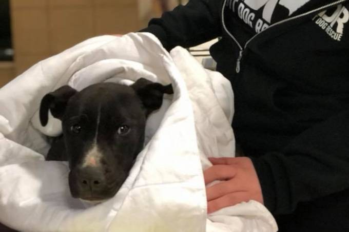 Joe Detroit Dog Rescue frio EUA cão