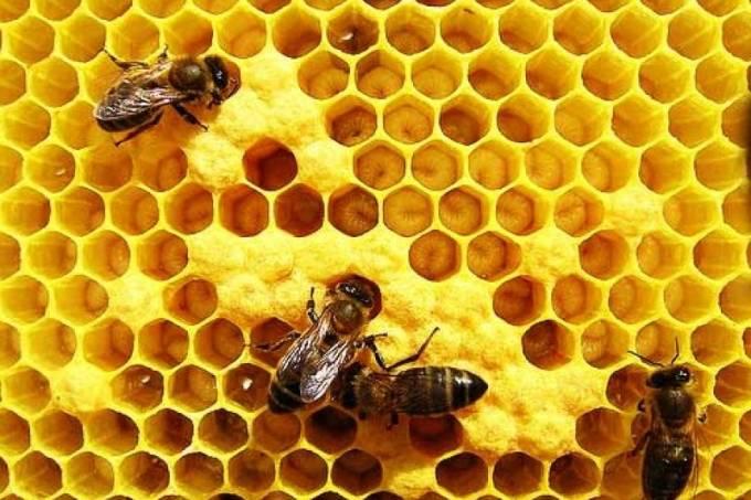 20150708100627-apicultura-abelhas