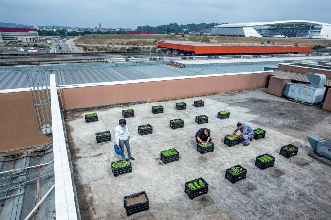 Horta no telhado