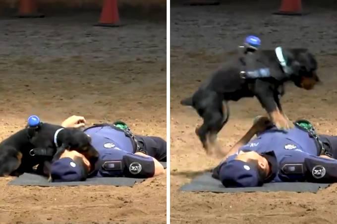 cachorro-policial-massagem-cardiaca-01