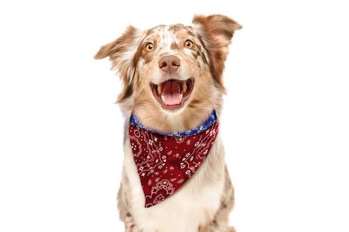 bandana cachorro