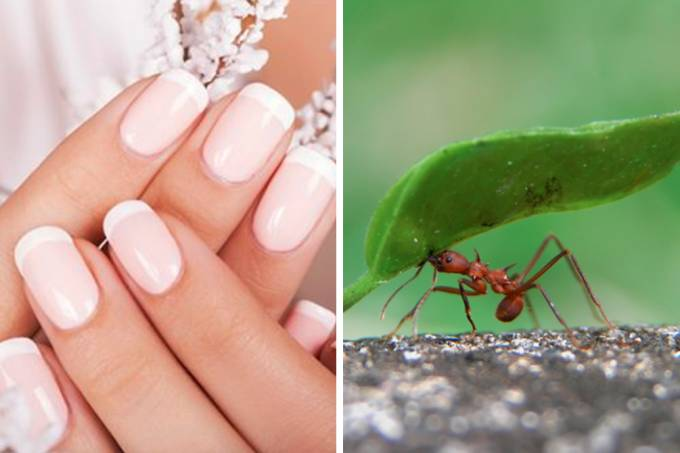 manicure-controversa-formigas-01