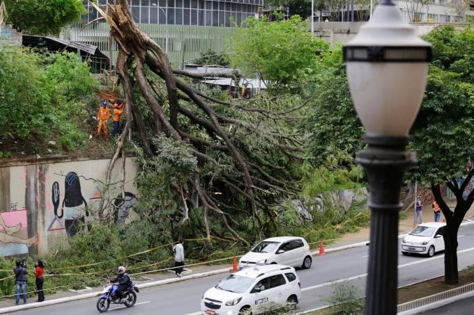árvore nove de julho caiu