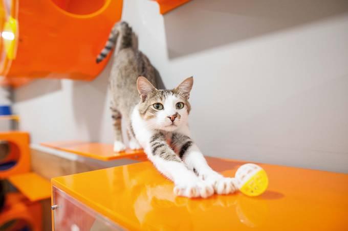 Petz adoção gatil