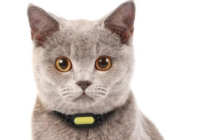 gato coleira inteligente