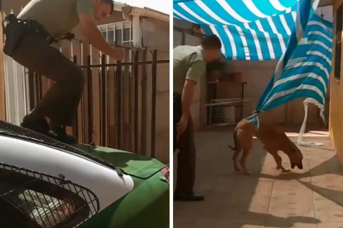 cachorro-resgate-abraco-01