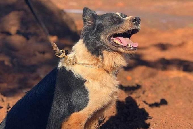 thor cachorro resgatava vitimas brumadinho mariana