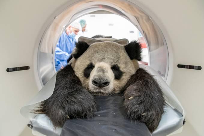 panda-tomografia-01