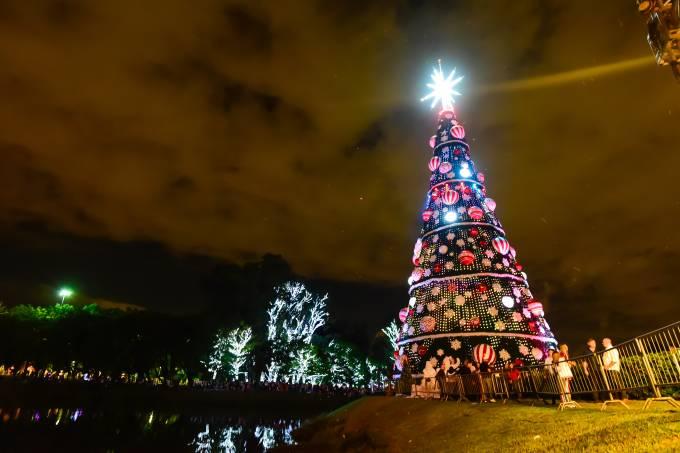 Árvore Ibirapuera