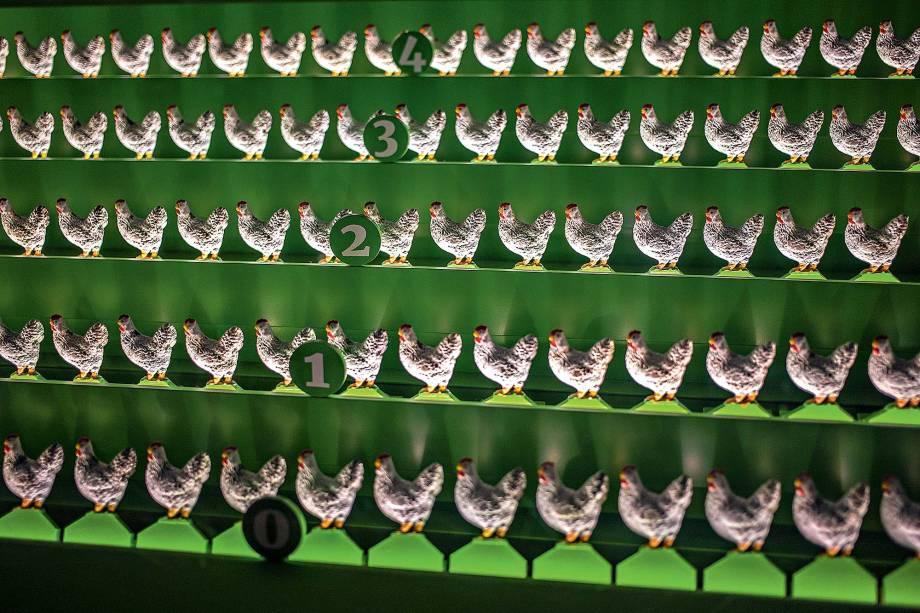 Cólera aviária: o visitante atribui dosagens de vacina diferentes às fileiras de galinhas e observa quais aves sobrevivem à doença