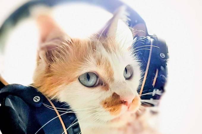 Gato toon