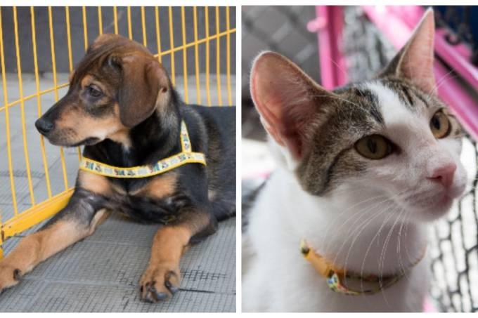 Doação Pets