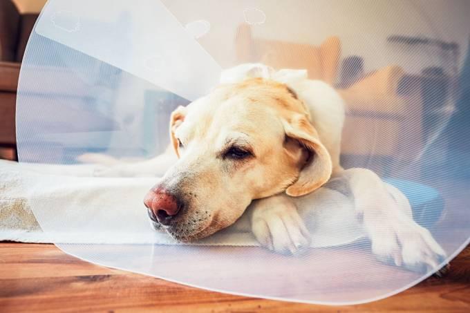 castração animal cirurgia bicho