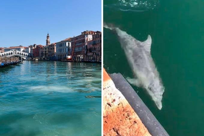 golfinhos-veneza-fake-01