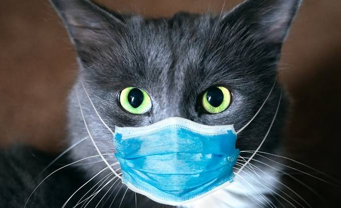 gatos coronavirus