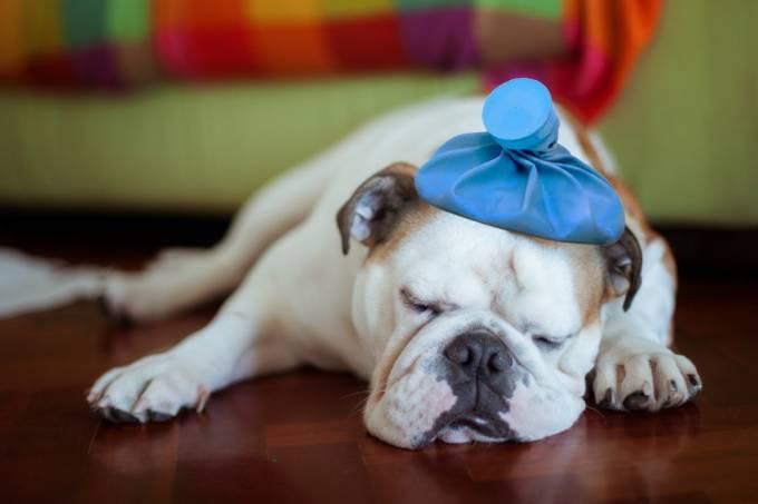 Cachorro pet doente sick
