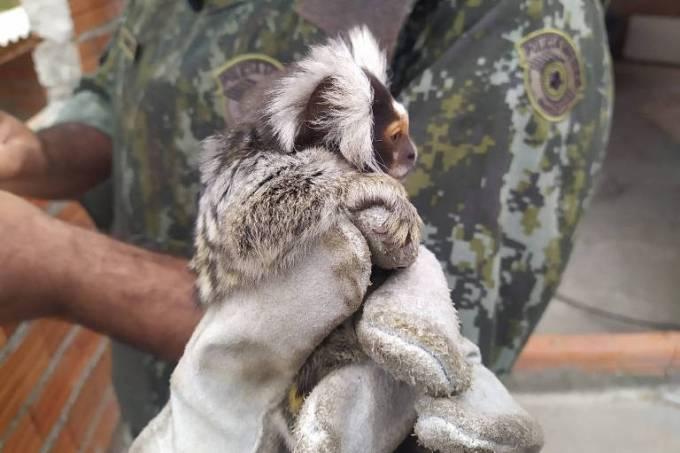 trafico-animais-silvestres-sp
