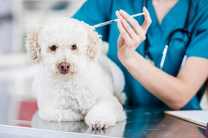 Cachorro vacina