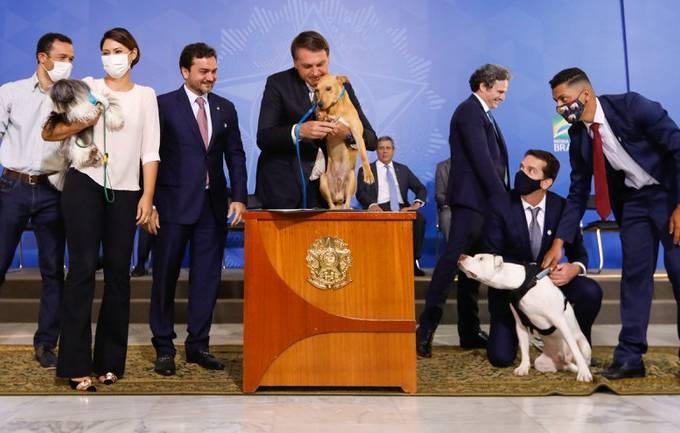 Bolsonaro maus-tratos