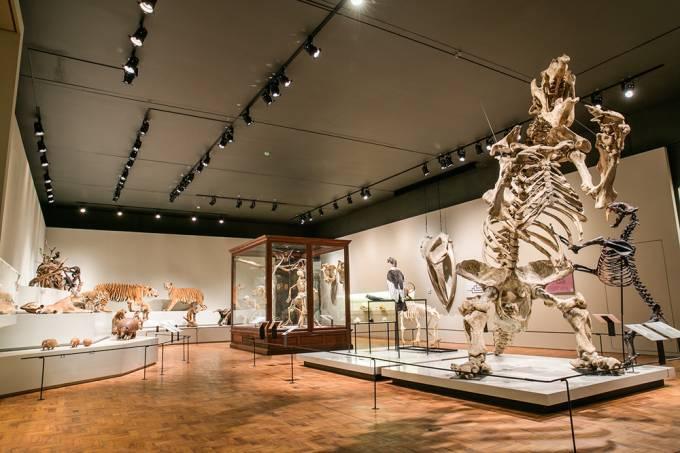 Museu de Zoologia