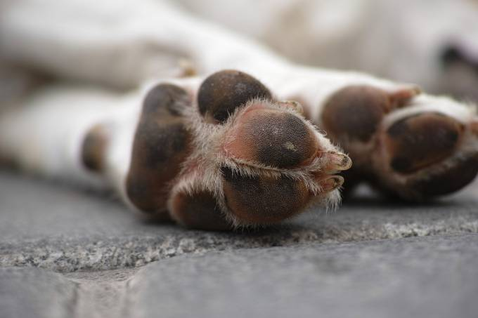 cachorro pata