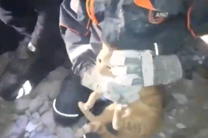 Gato resgatado na Turquia (Reprodução-Twitter)